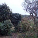 みかん 木の家