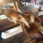 スキップスッテプ ネコ